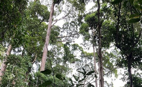 ボルネオ ジャングル