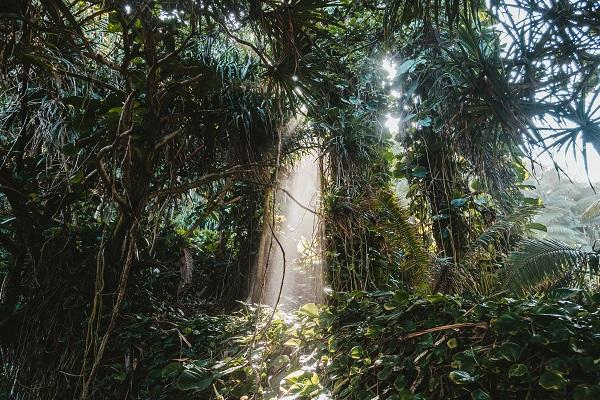 コタキナバル ジャングル